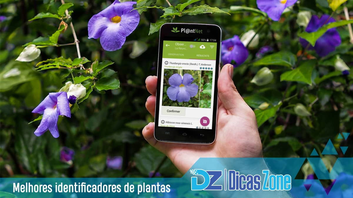 identificação de plantas